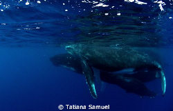 Vava'u Group - Tonga 